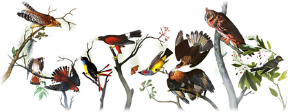 Logo Google Audubon